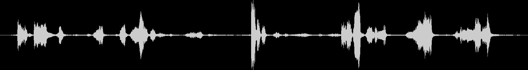 灰色のオウムの小グループ:発声、鳥の未再生の波形
