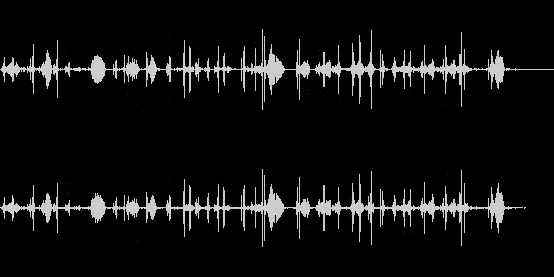 豚イノシシの未再生の波形