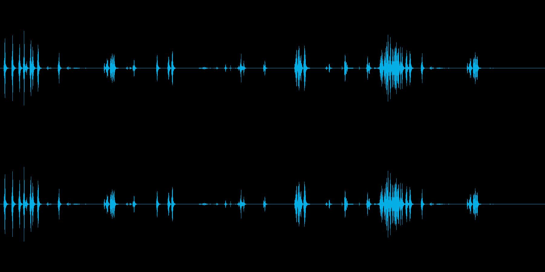 インコ環境さまざまな呼び出しの再生済みの波形