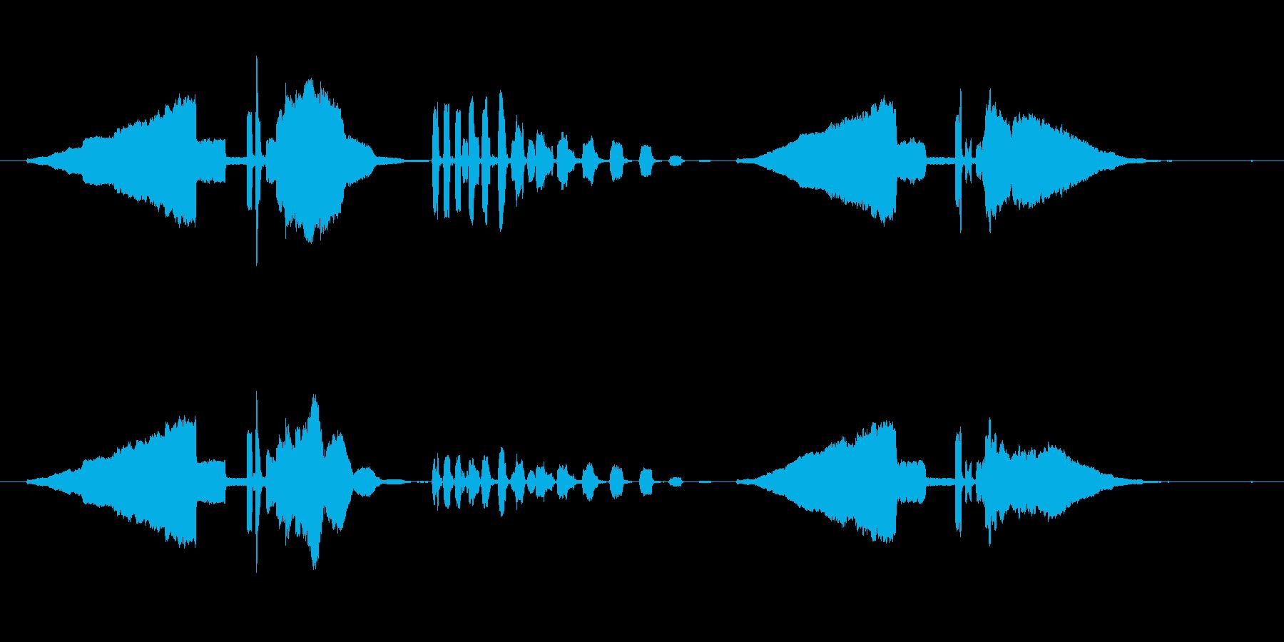 うぐいす笛1エコー梅に鶯春鳴き声初音ホーの再生済みの波形