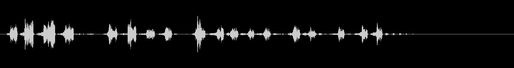 モルモットの未再生の波形