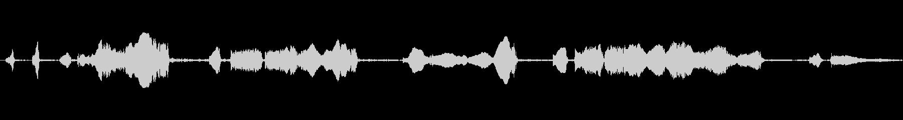 ラットの鳴き声、チャタリングの未再生の波形