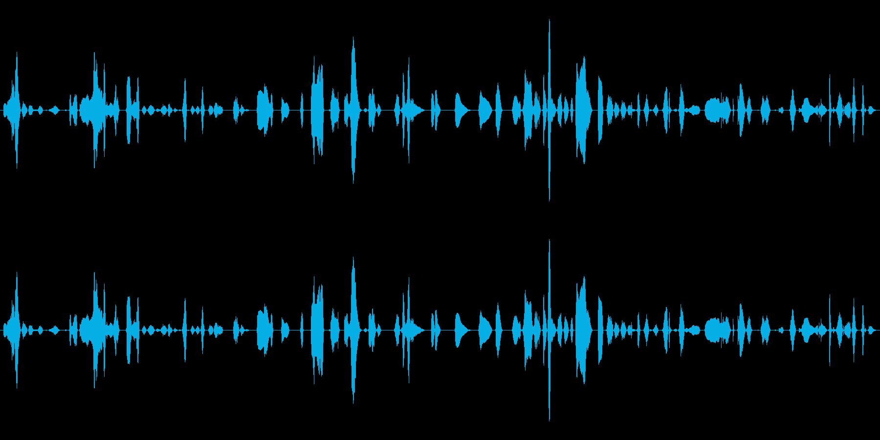 鳴き声 女性のワイン01の再生済みの波形