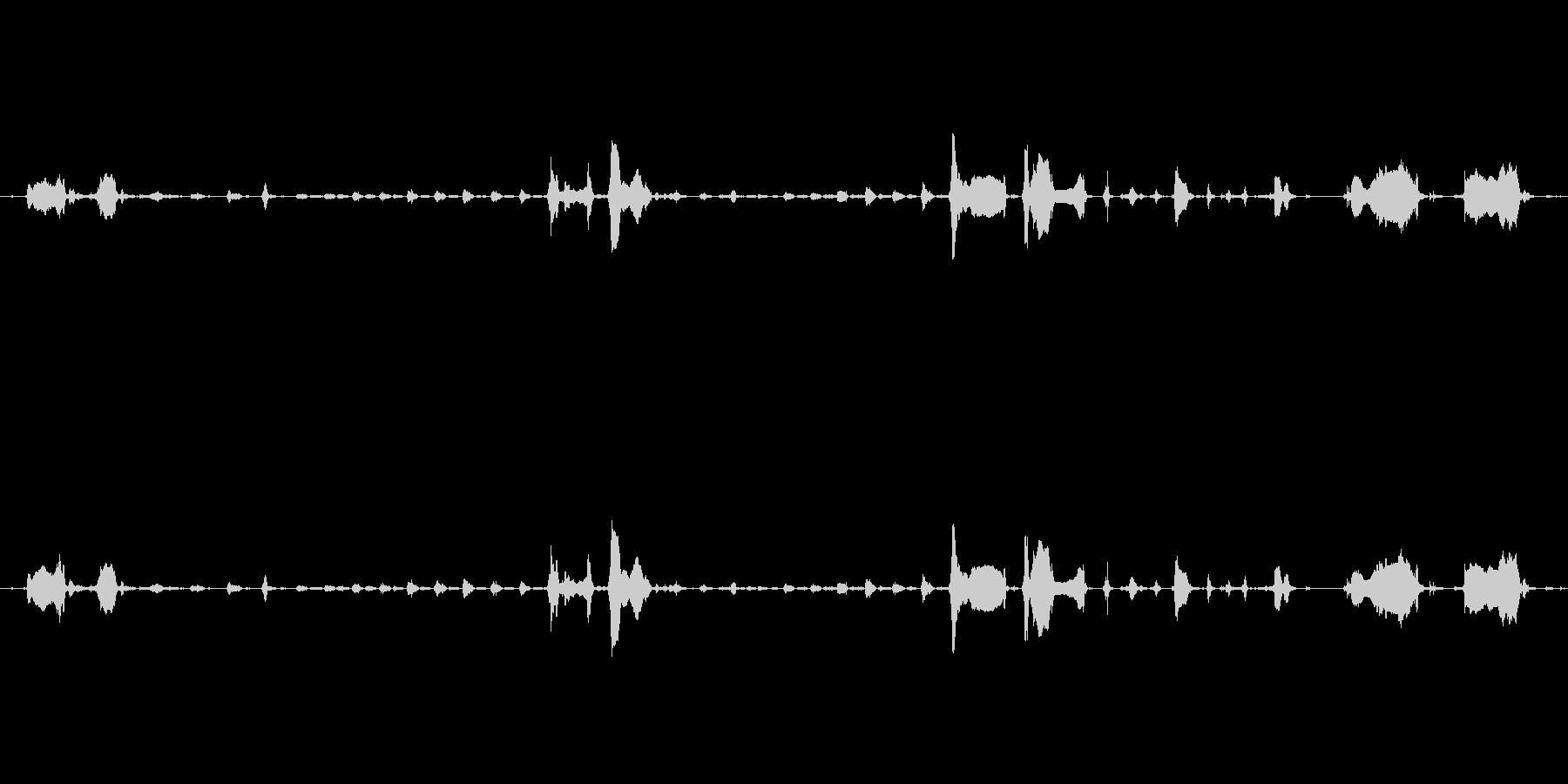 犬 GSP ワインパンツ03の未再生の波形