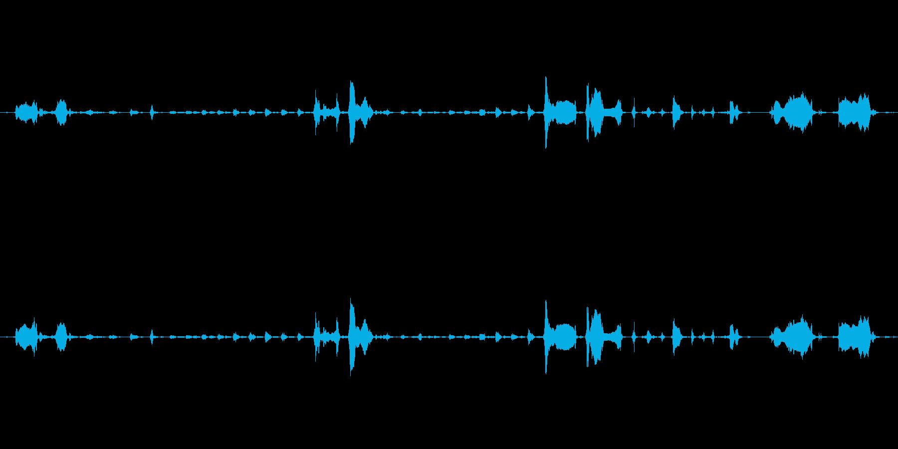 犬 GSP ワインパンツ03の再生済みの波形