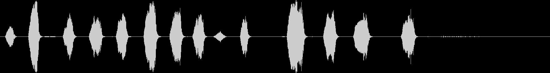コンゴウインコの呼び出し。多くの短...の未再生の波形