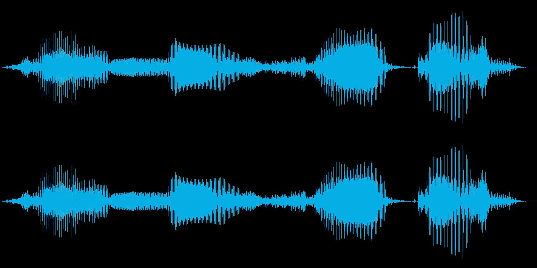 「全問正解」子供クイズアプリ男性ボイスの再生済みの波形