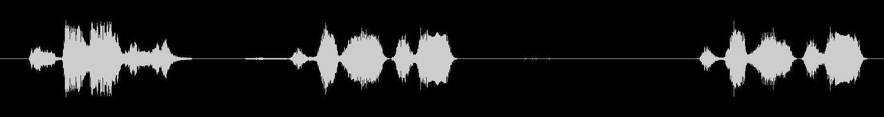 ミニチュアルースターカラス3回、屋...の未再生の波形
