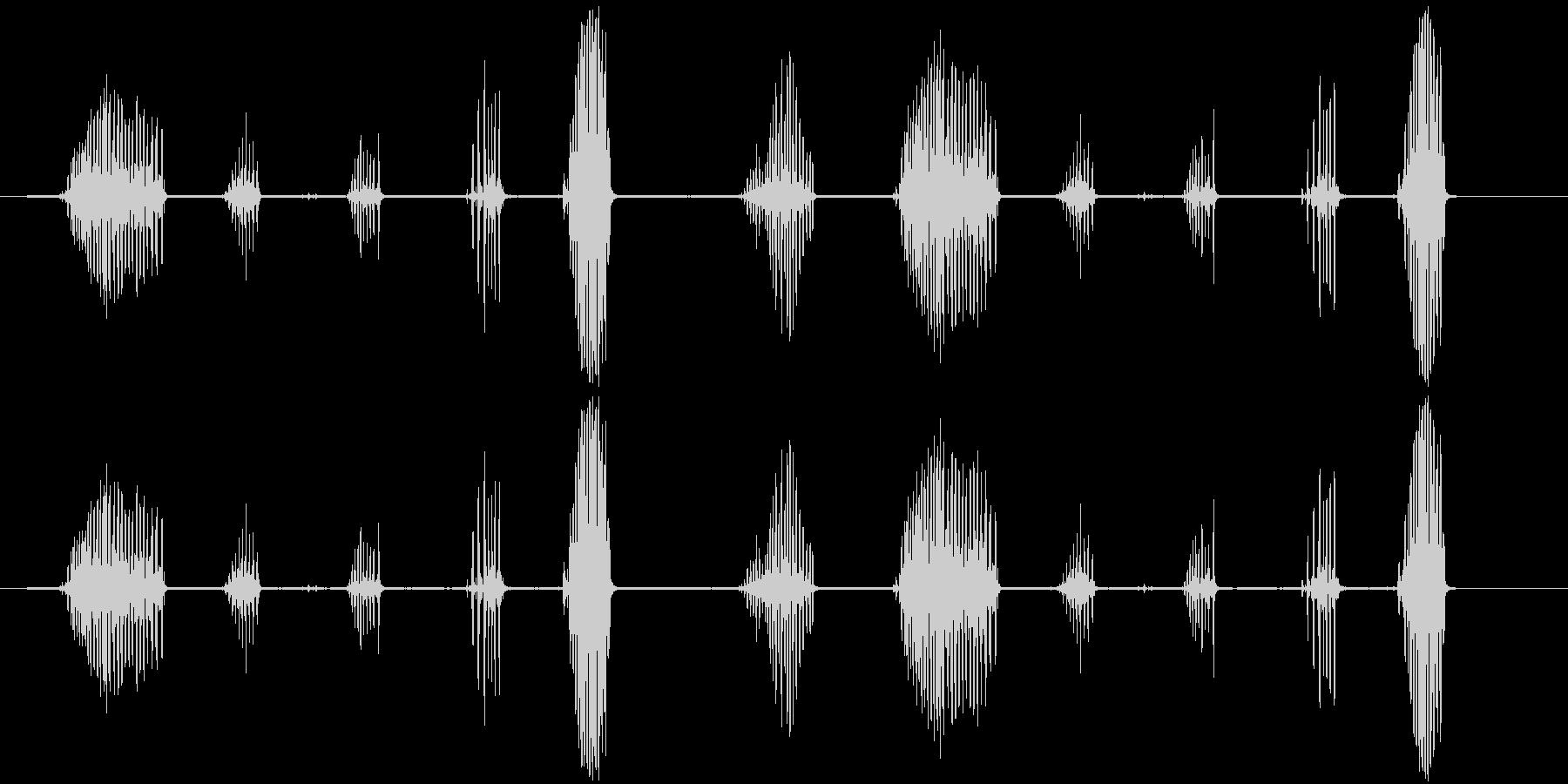 シマリスのおしゃべり。高音のびびり...の未再生の波形