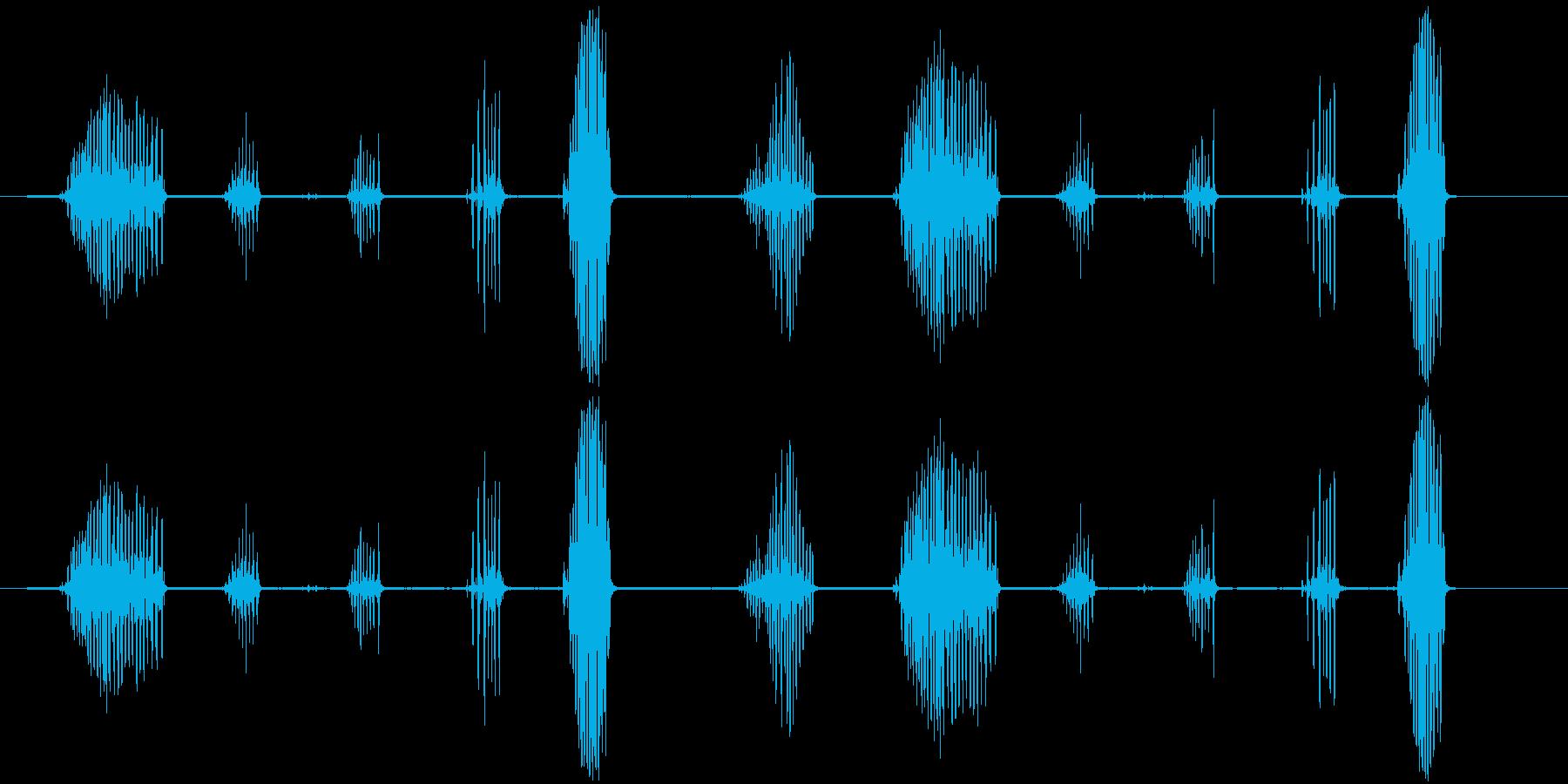 シマリスのおしゃべり。高音のびびり...の再生済みの波形