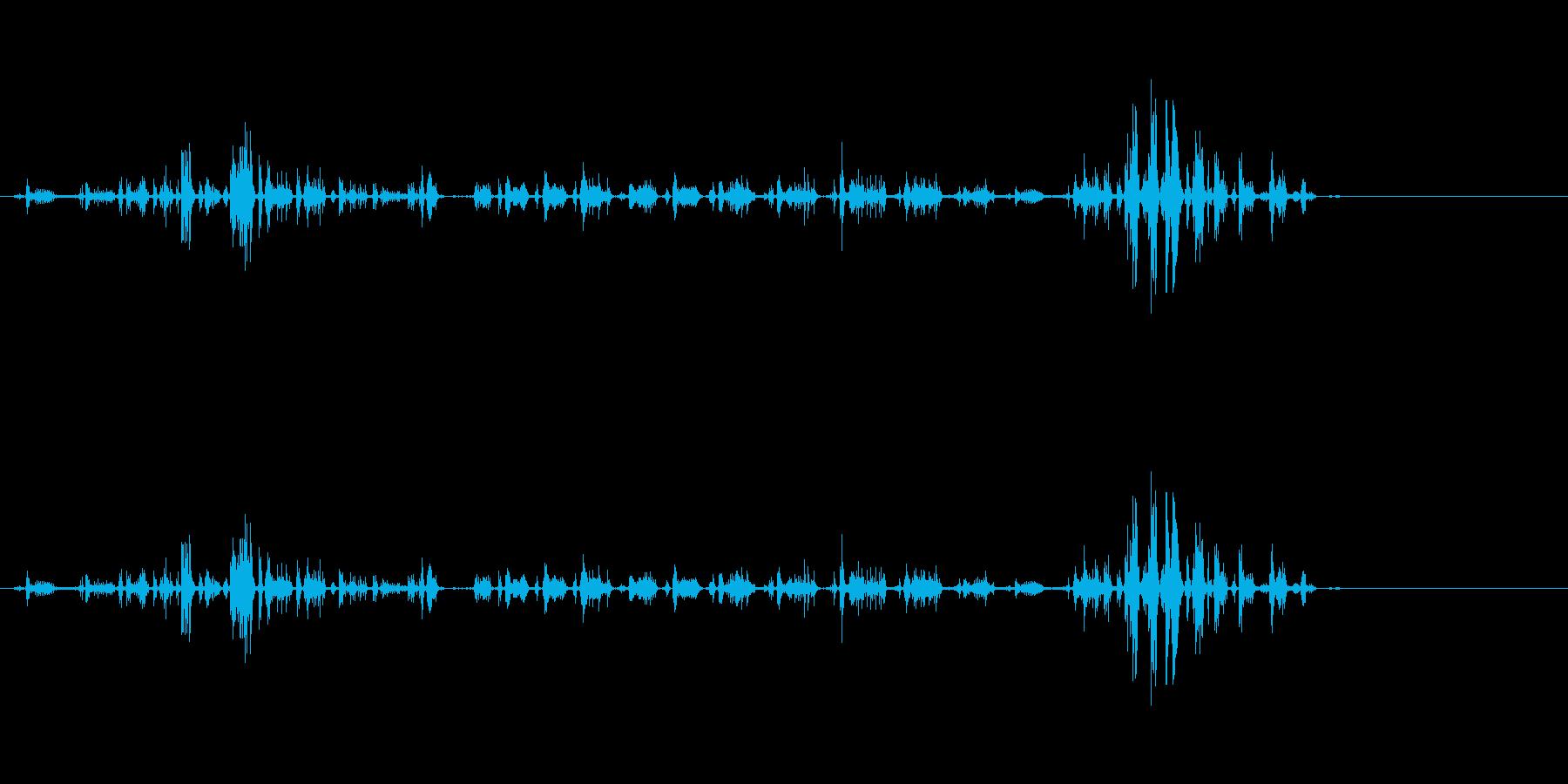 動物、ライオンの鳴き声とうなり声の再生済みの波形