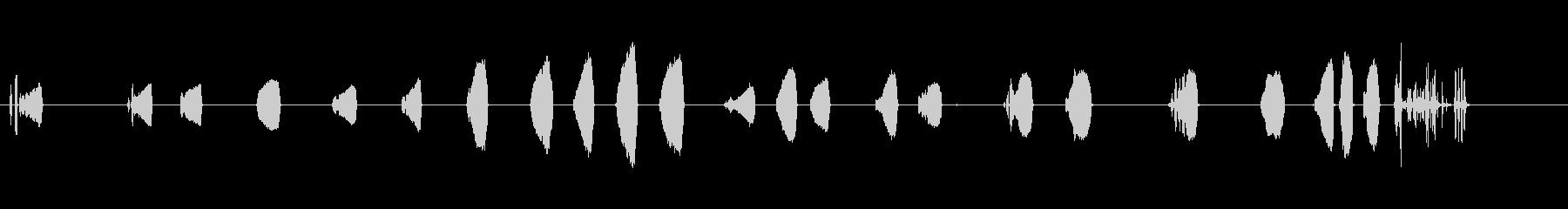鷹-鳥の未再生の波形