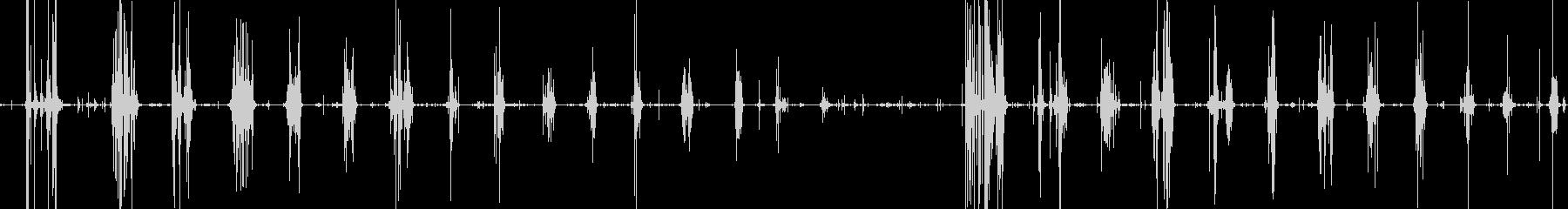 たくあんをボリッコリッとかじる音の未再生の波形
