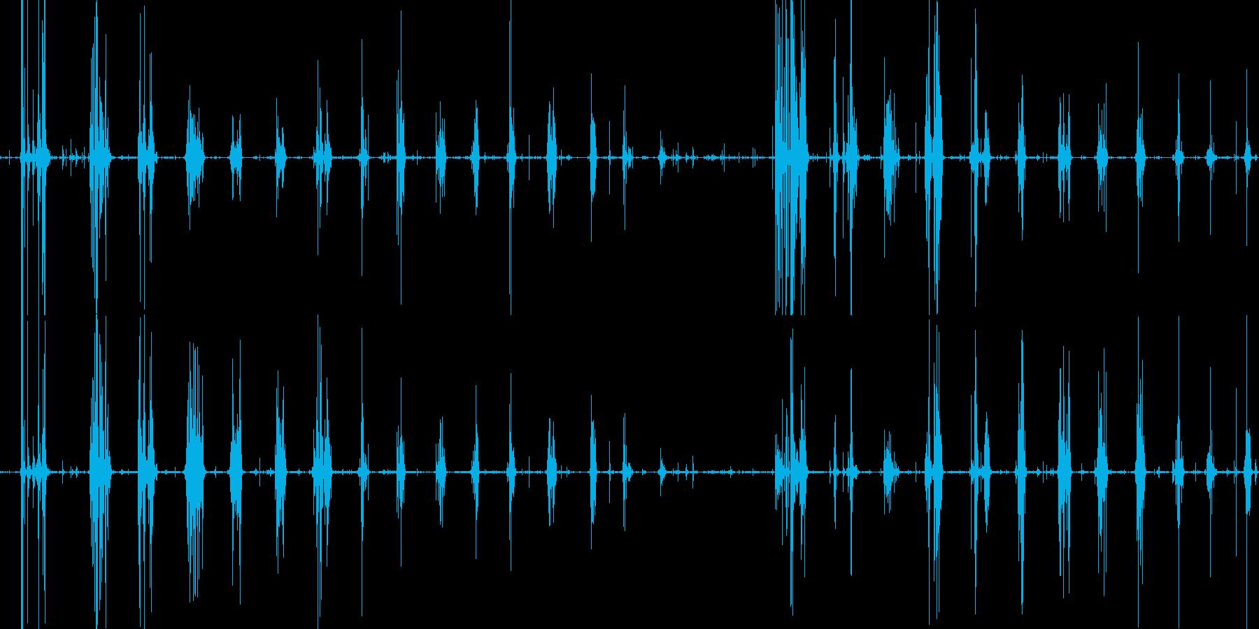 たくあんをボリッコリッとかじる音の再生済みの波形