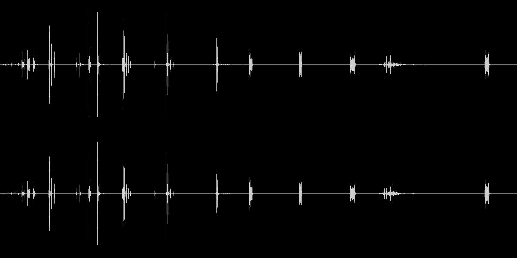 ハクトウワシ:さまざまなチャープ、...の未再生の波形
