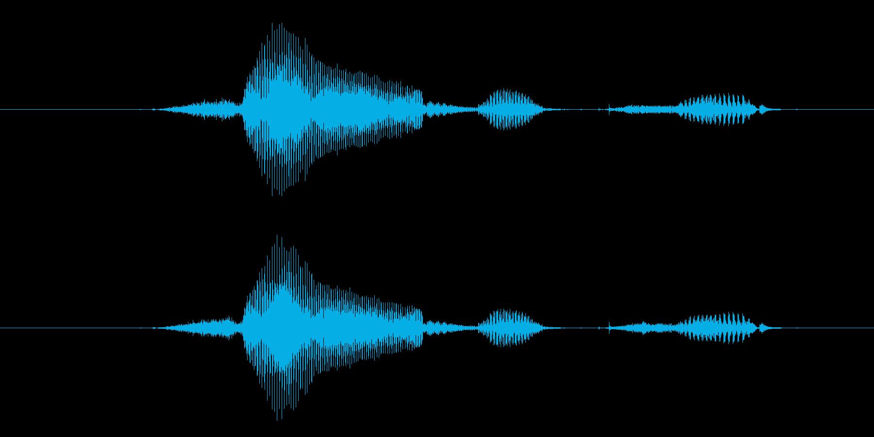 生物の再生済みの波形
