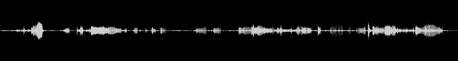 クリック、録音されたハイドロフォン、動物の未再生の波形