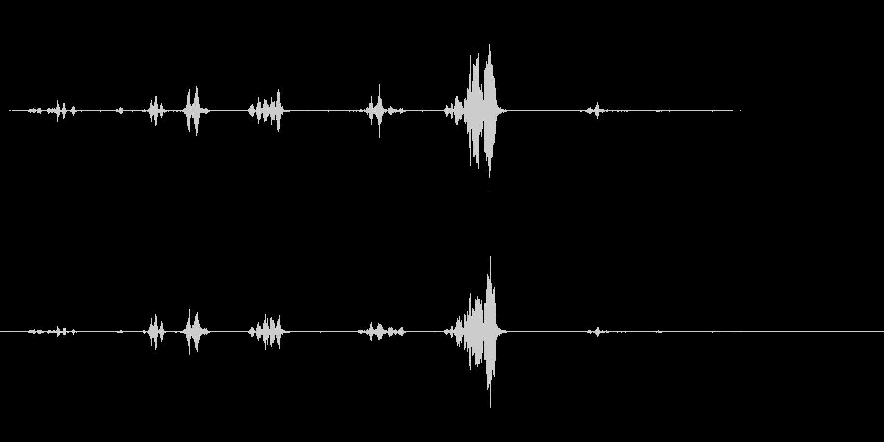オウム-話す-スウェーデン語-Bi...の未再生の波形