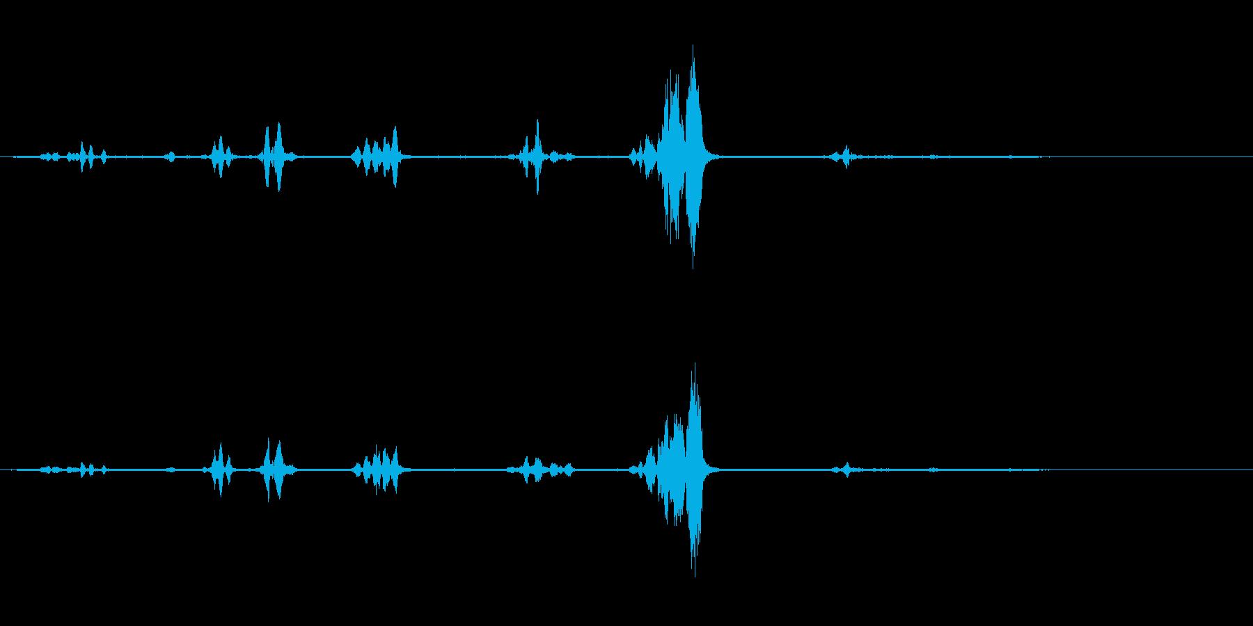 オウム-話す-スウェーデン語-Bi...の再生済みの波形