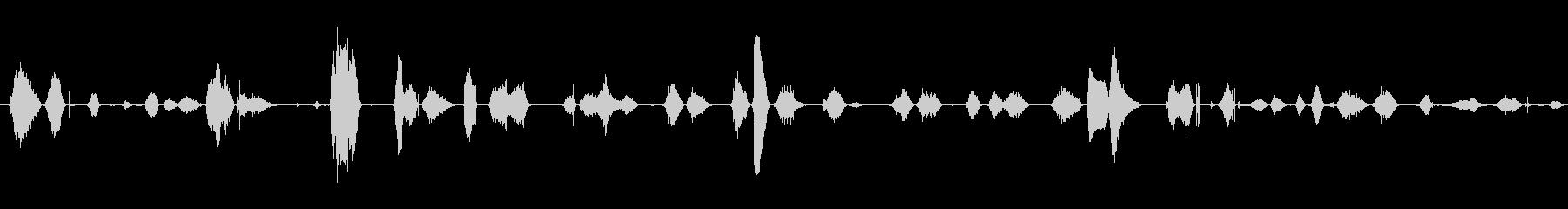 鳴き声 女性のワイン02の未再生の波形