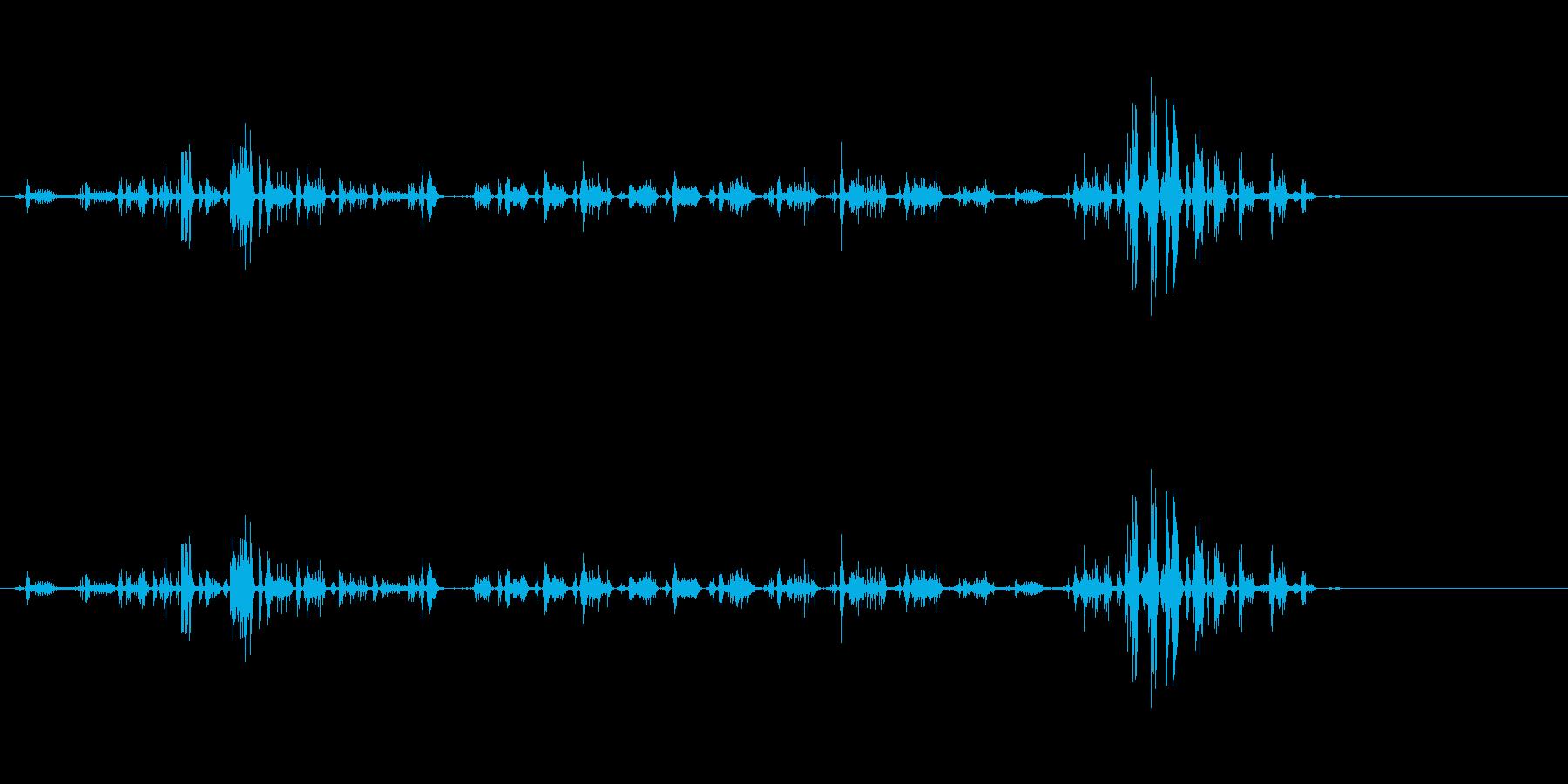 ライオンのゴロゴロの再生済みの波形