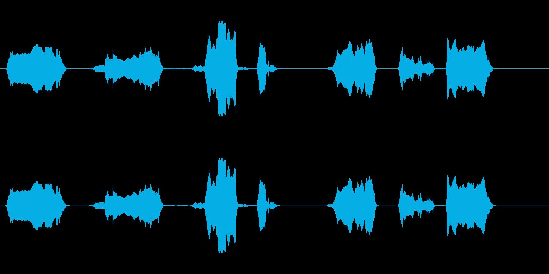 ブルベローズ;さまざまな、近い視点の再生済みの波形