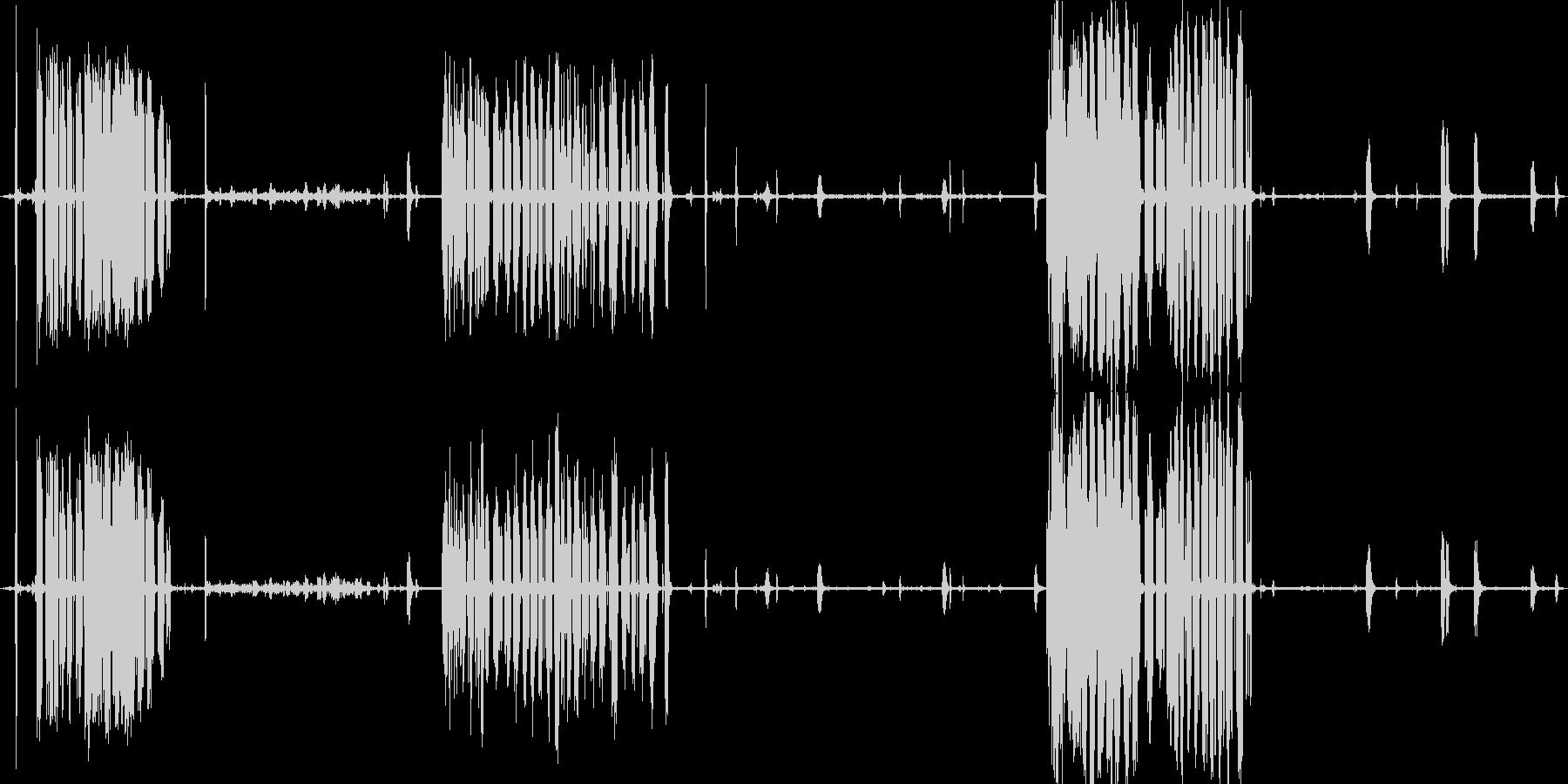 釧路湿原のタンチョウたち(冬の北海道)の未再生の波形