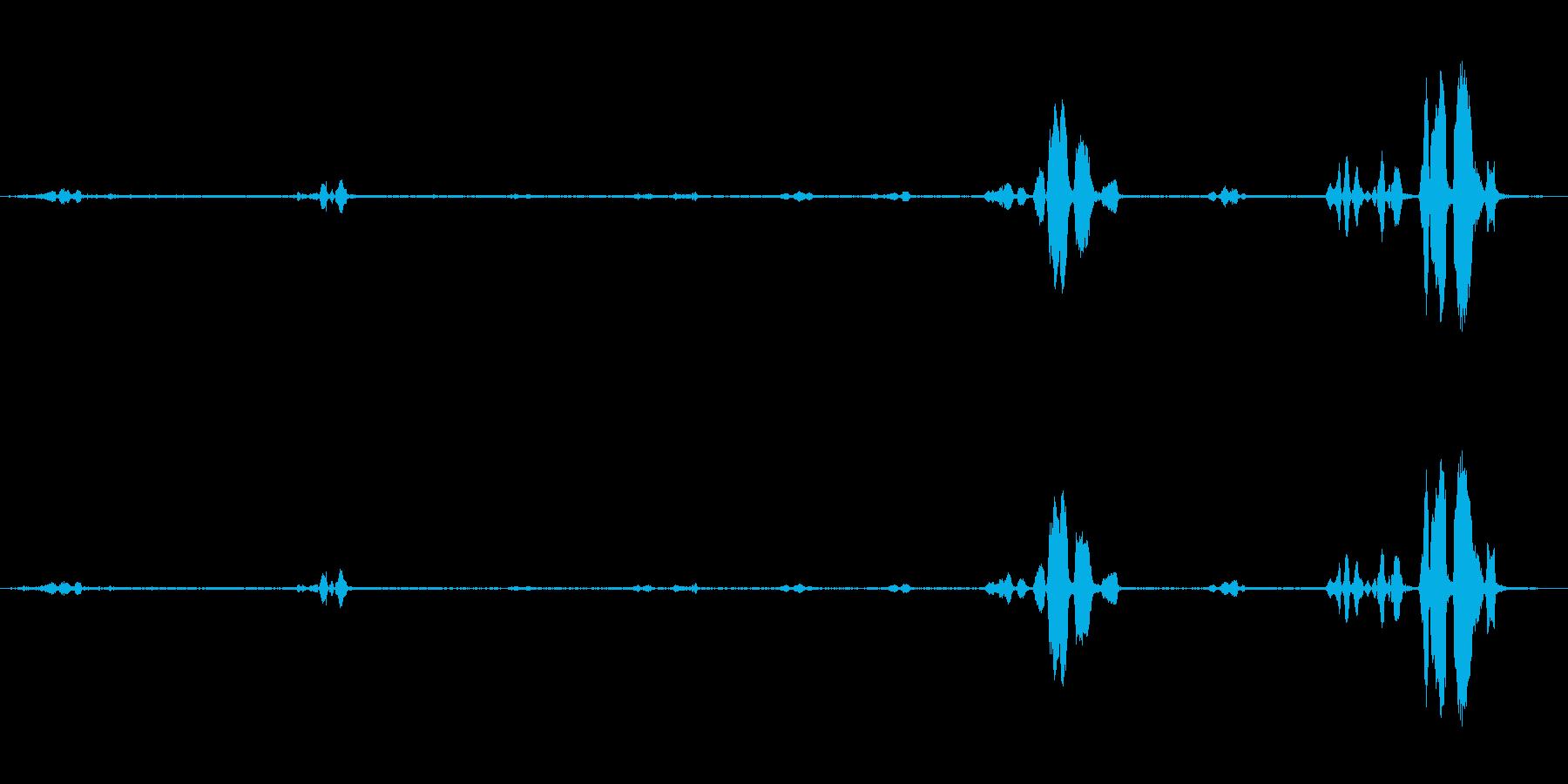 パロット、トーキング、スウェーデン...の再生済みの波形