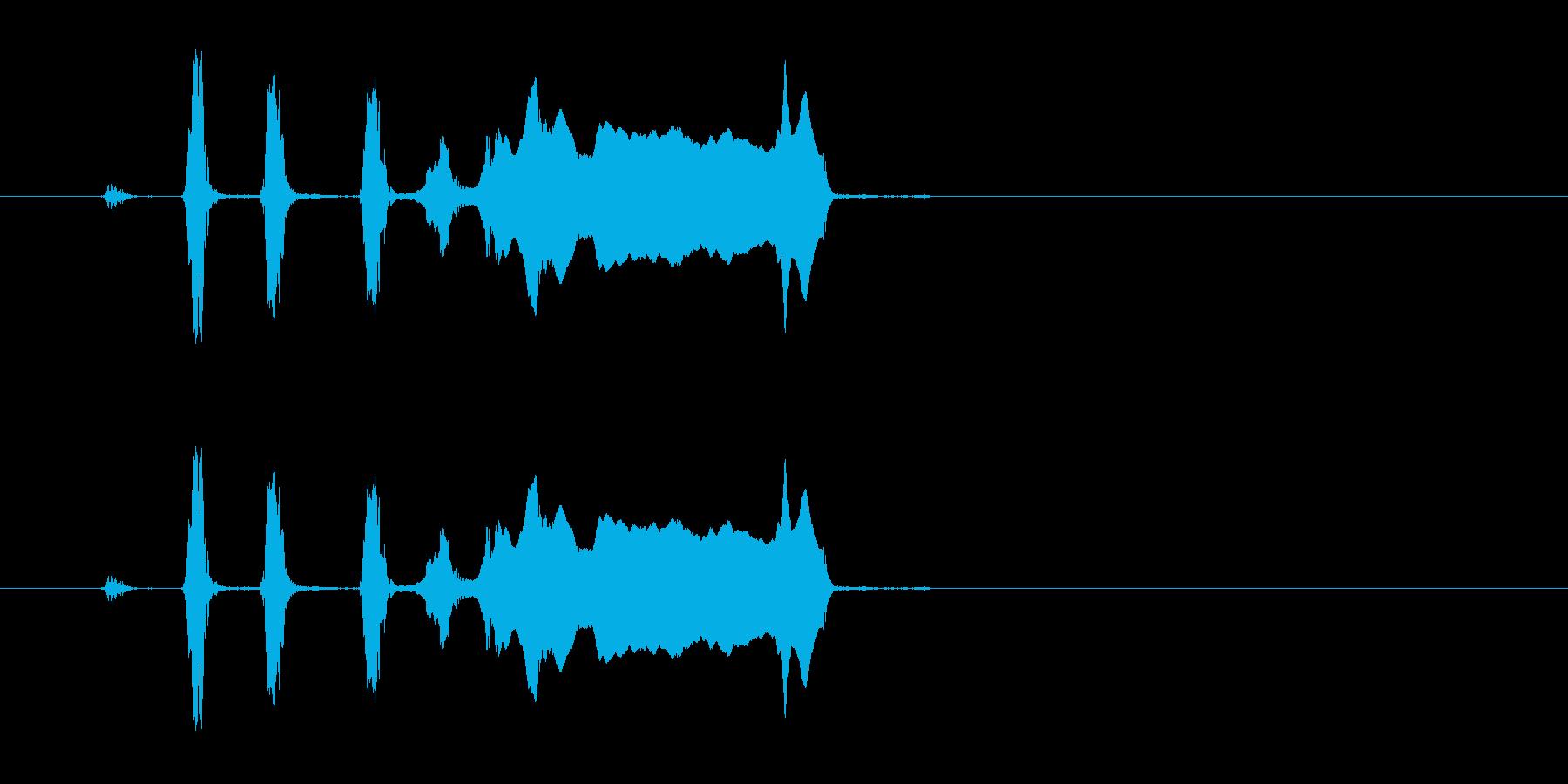 コヨーテハウル。 2つの短いYel...の再生済みの波形
