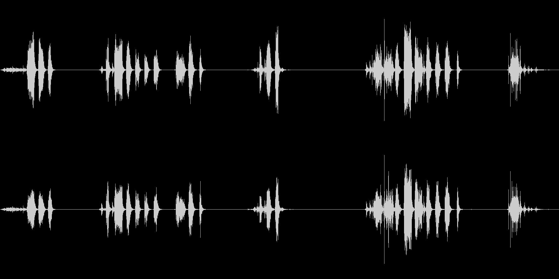 Hの中の鷹の鳴き声と羽ばたきの未再生の波形