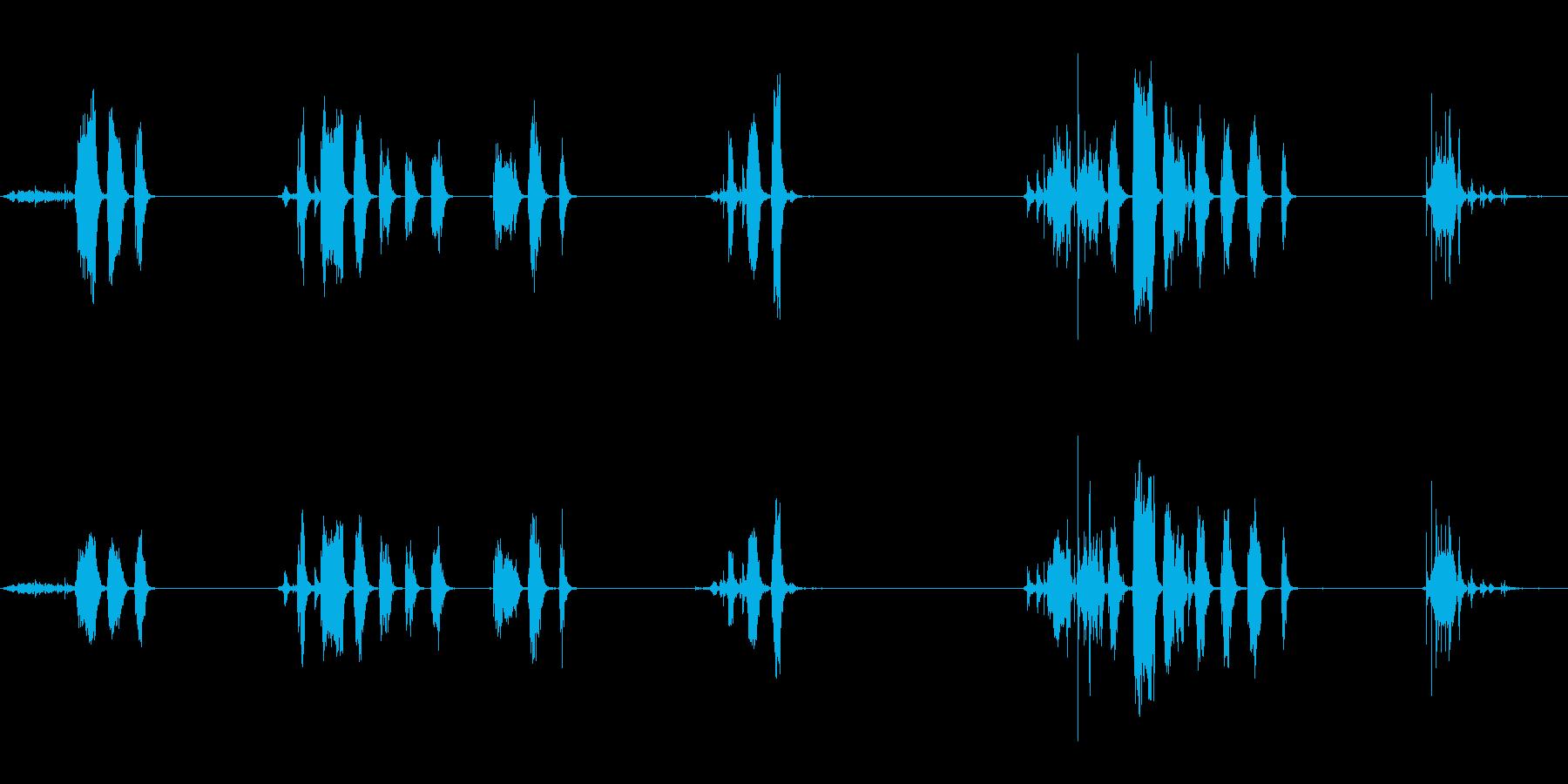 Hの中の鷹の鳴き声と羽ばたきの再生済みの波形