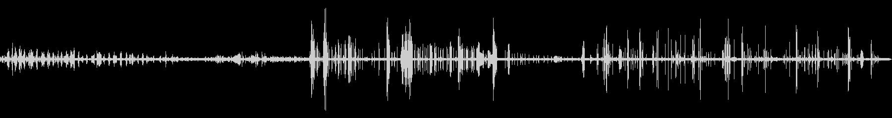 竹林の活発な鳥の鳴き声【秋、夕方】の未再生の波形