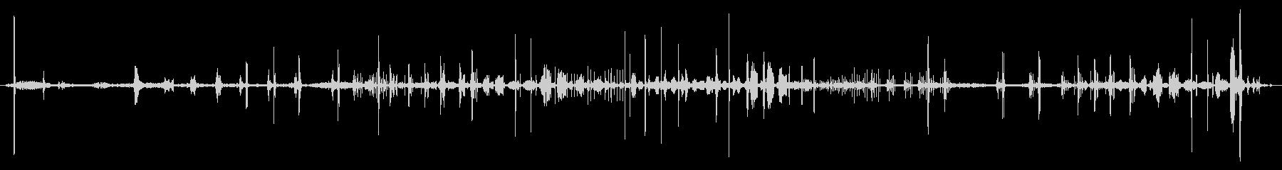 スターリング:鳴き声、動物の鳥の未再生の波形