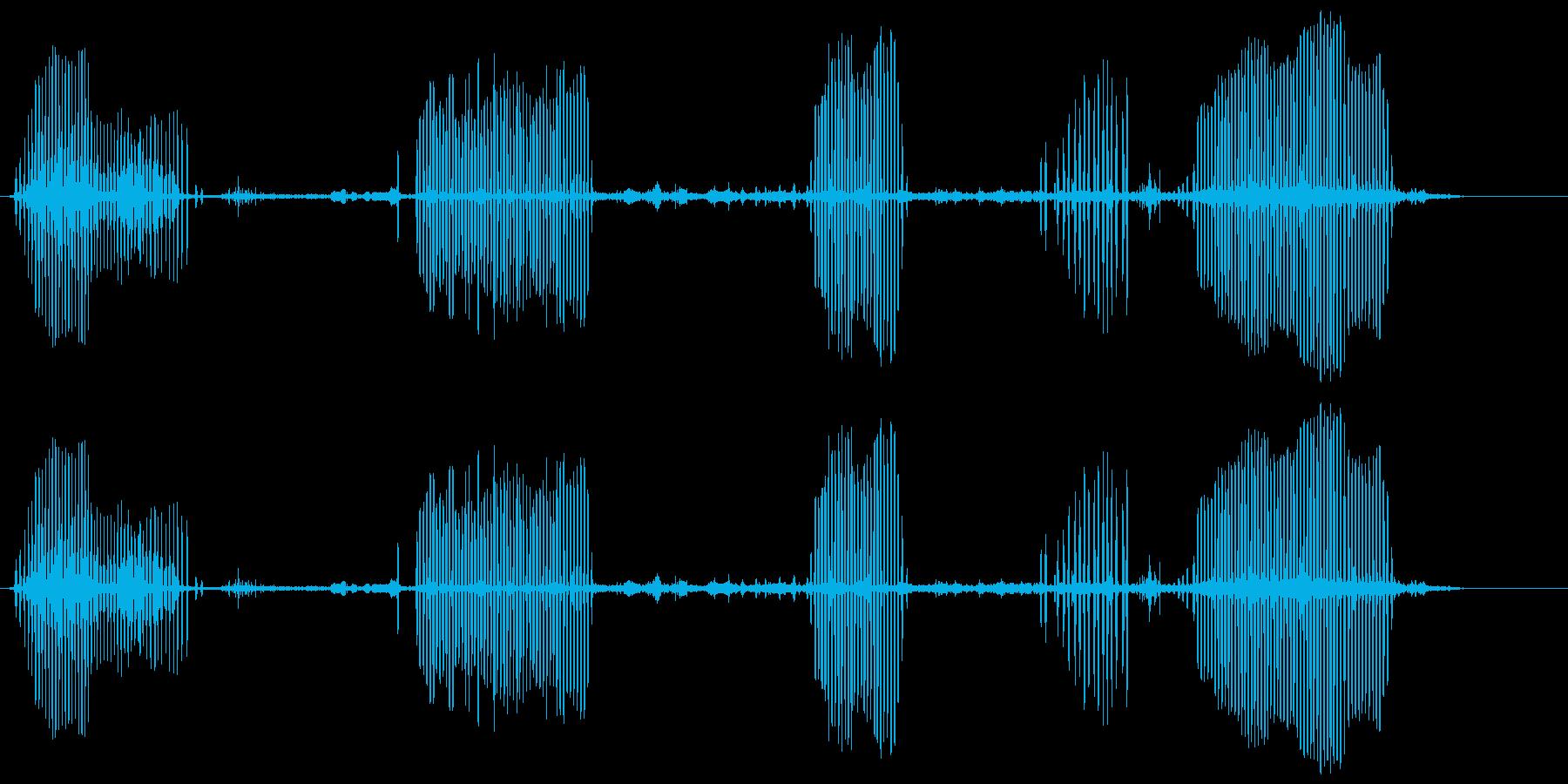 カイツブリの再生済みの波形