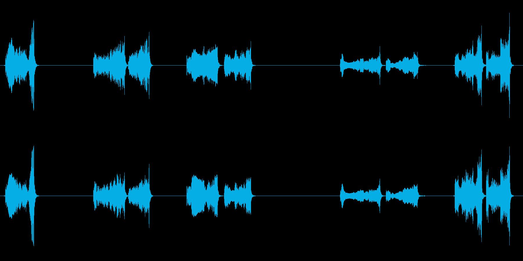 いくつかの孤立したハヤブサの鳴き声の再生済みの波形