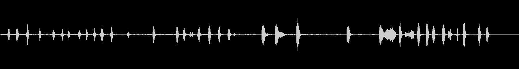 カワウソ、オリエンタル・スモール・...の未再生の波形