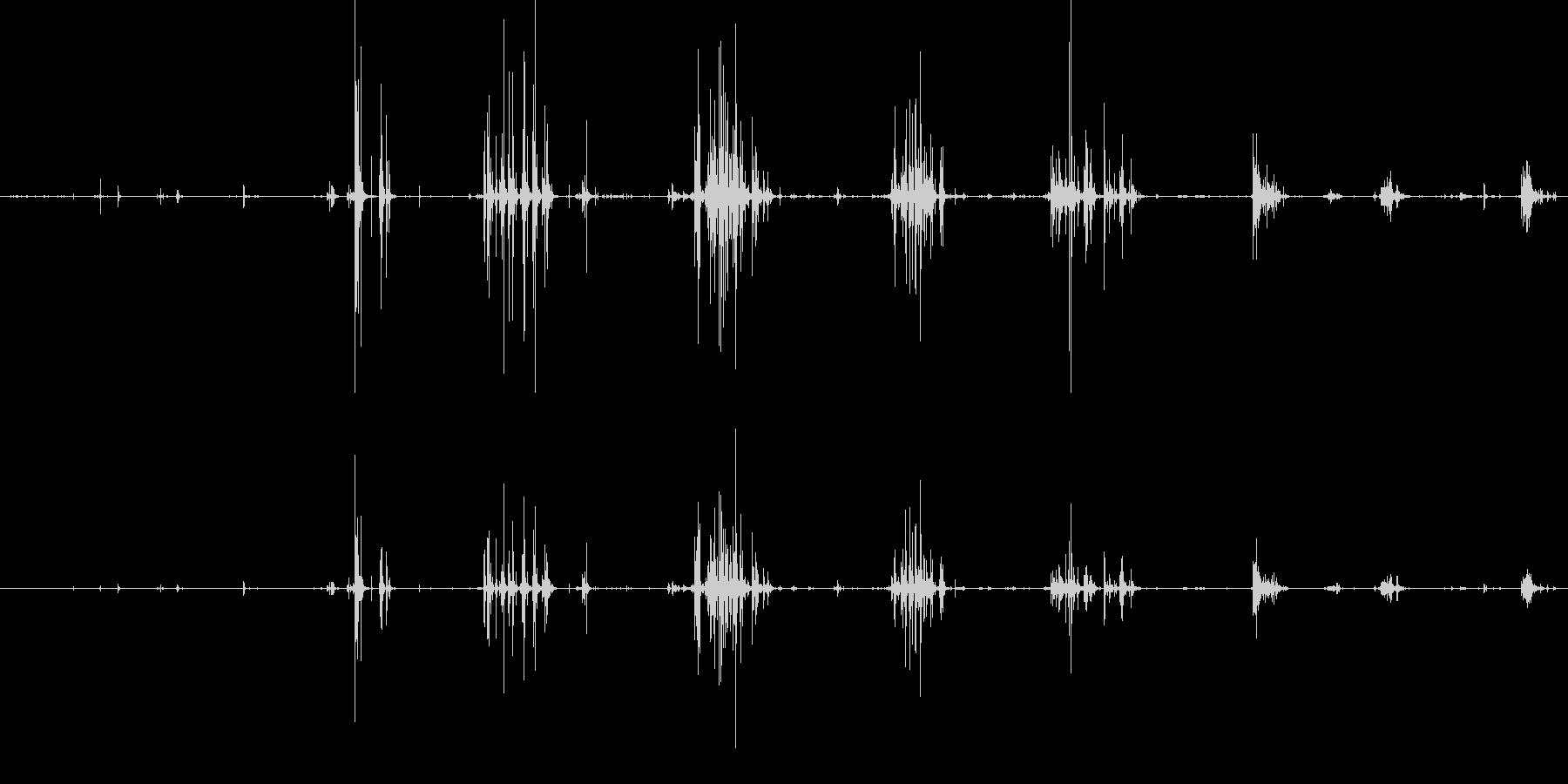パリパリという咀嚼音の未再生の波形