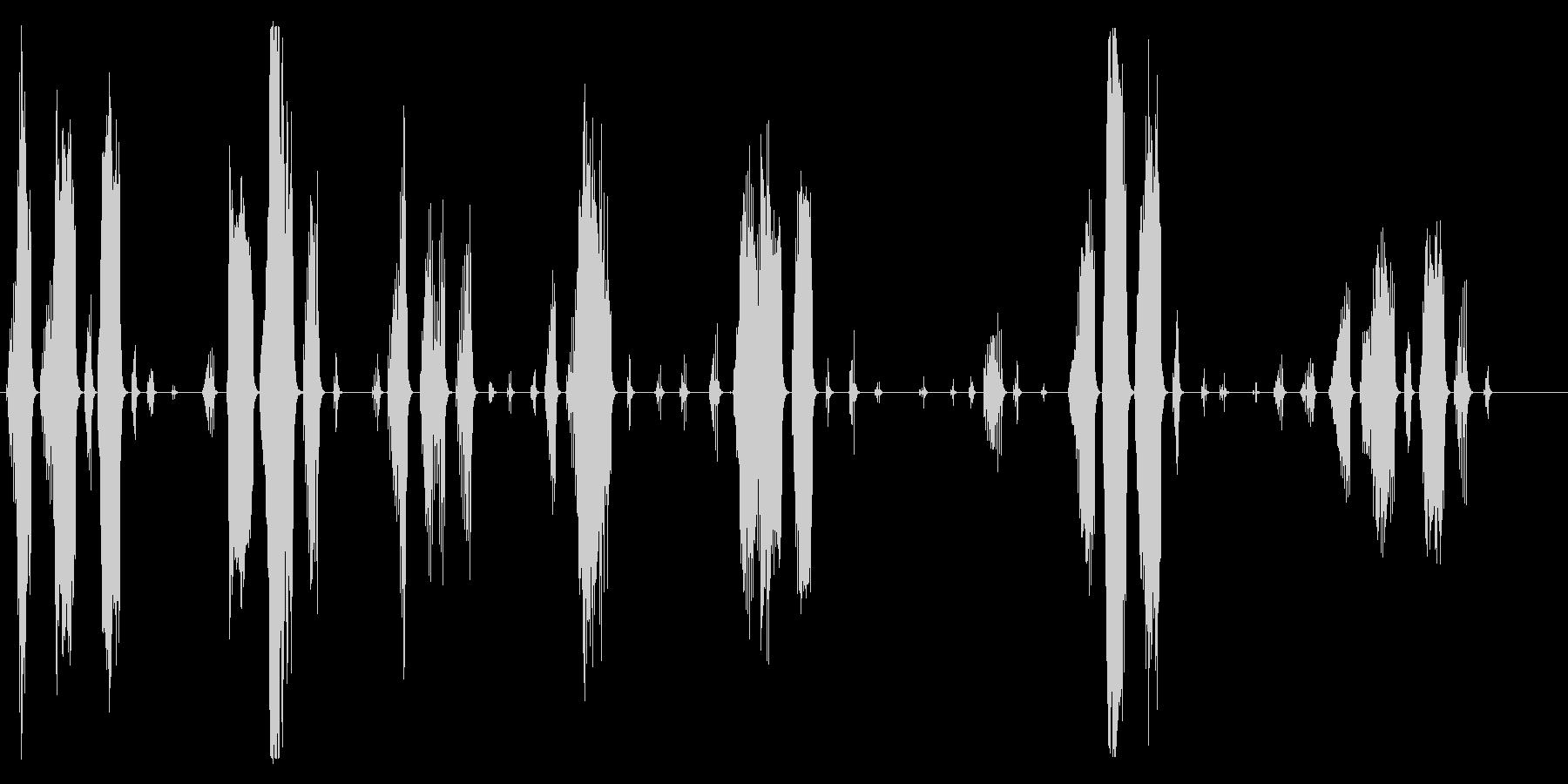 猿、オマキザルびびり、悲鳴。びびり...の未再生の波形