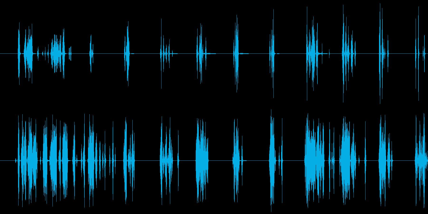 短いカリカリSt音の再生済みの波形