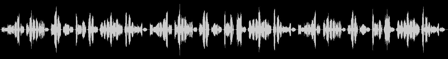 アメリカ人の女性セミプロ歌手がABCソ…の未再生の波形