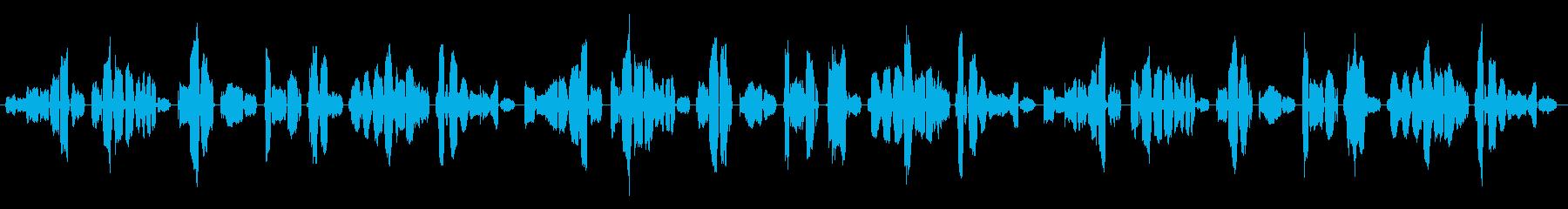 アメリカ人の女性セミプロ歌手がABCソ…の再生済みの波形