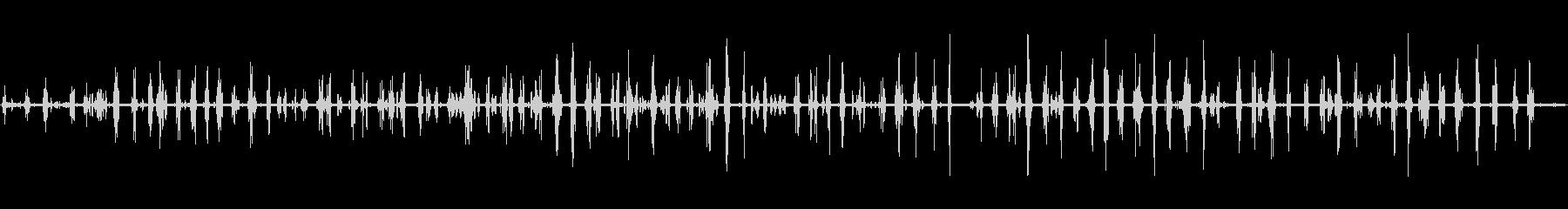 環境音 アフリカのブッシュ朝鳥01の未再生の波形