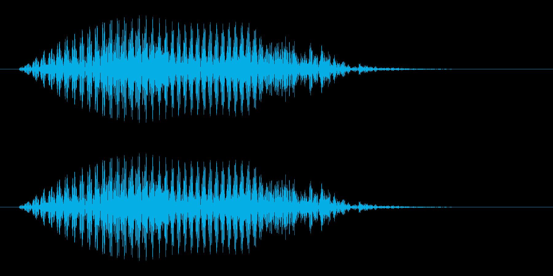 アシカがオォッ、と鳴く声の再生済みの波形
