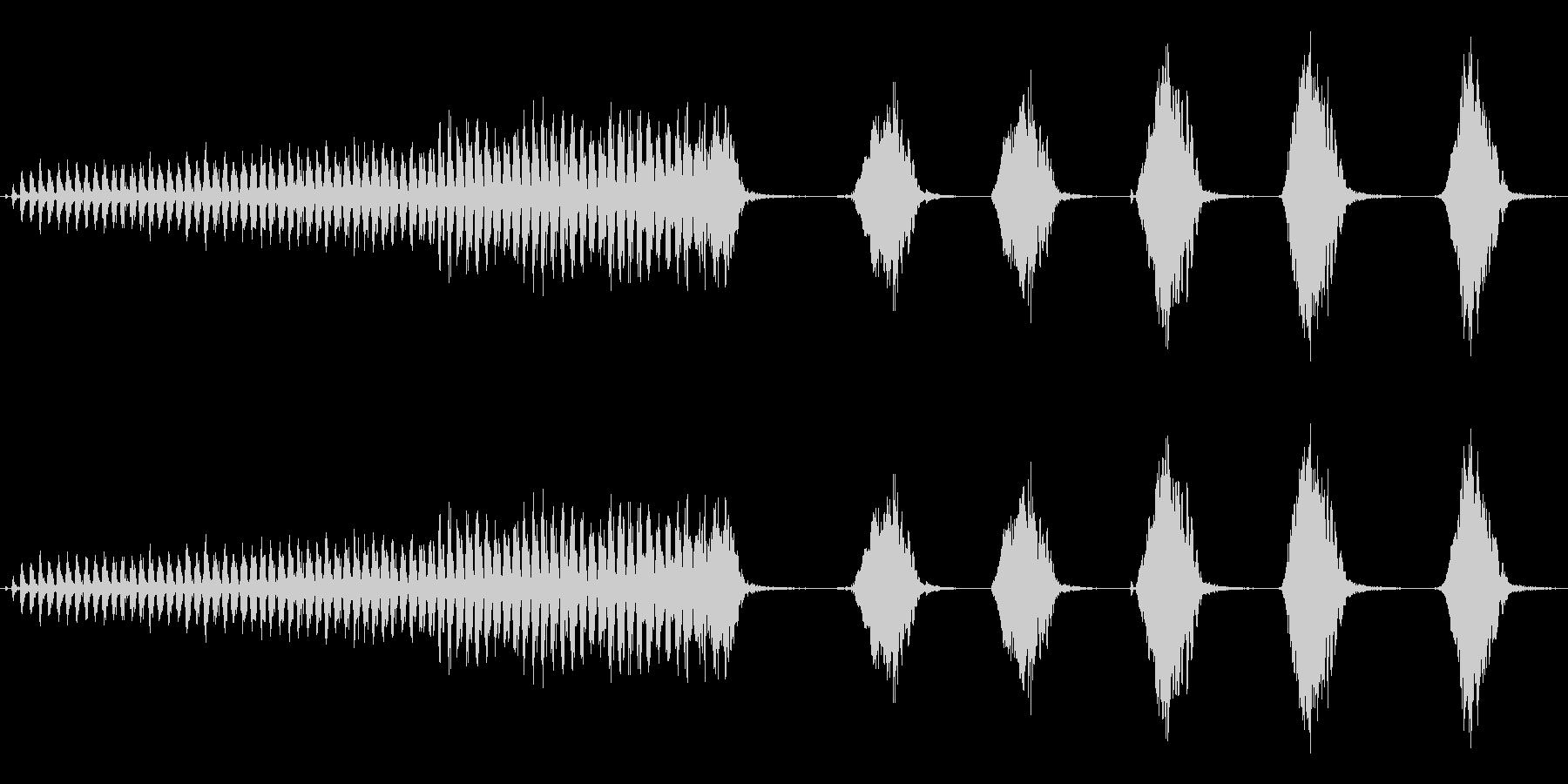 オナガの鳴き声(ブルーの体色のカラス)の未再生の波形