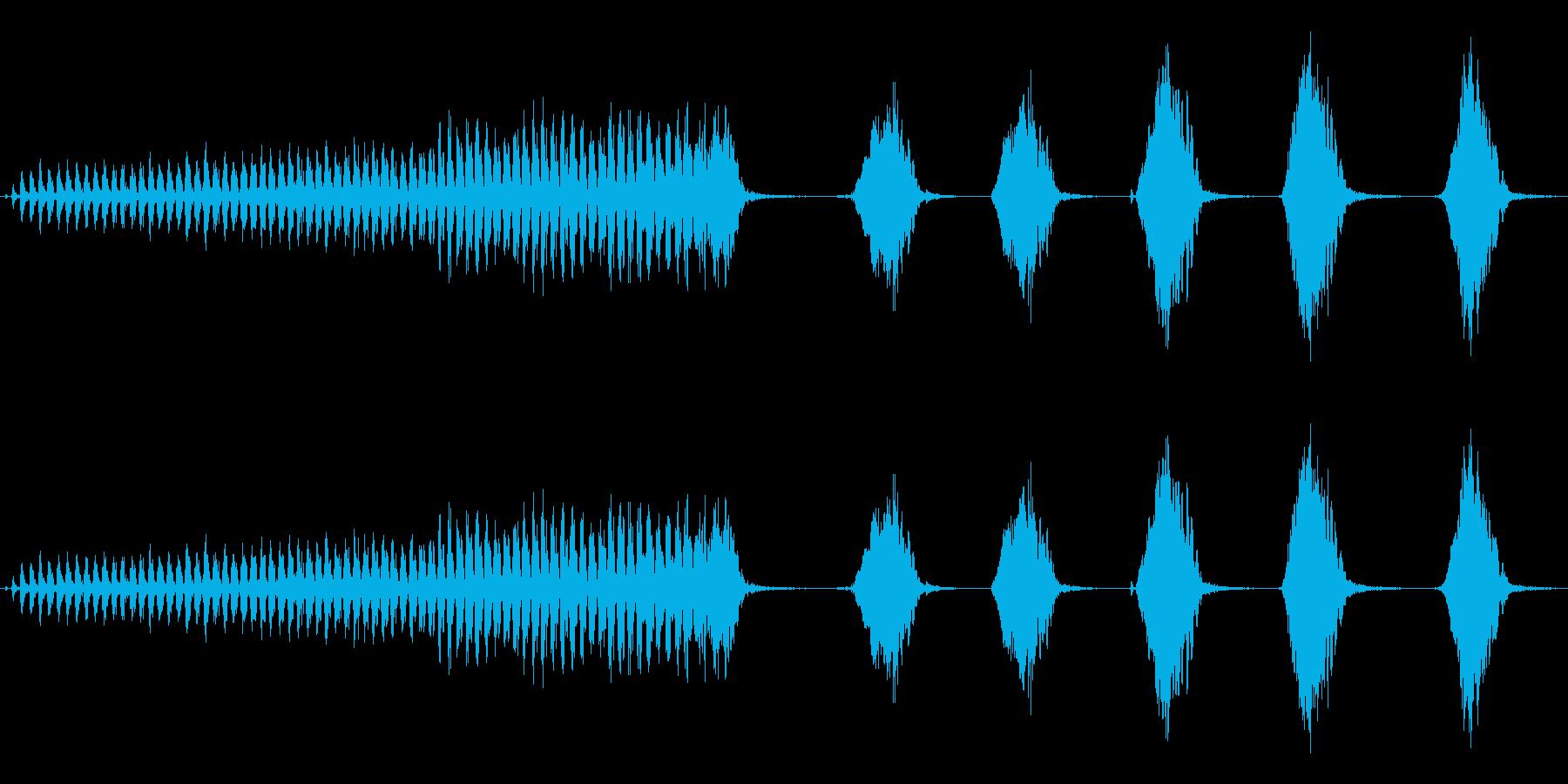 オナガの鳴き声(ブルーの体色のカラス)の再生済みの波形