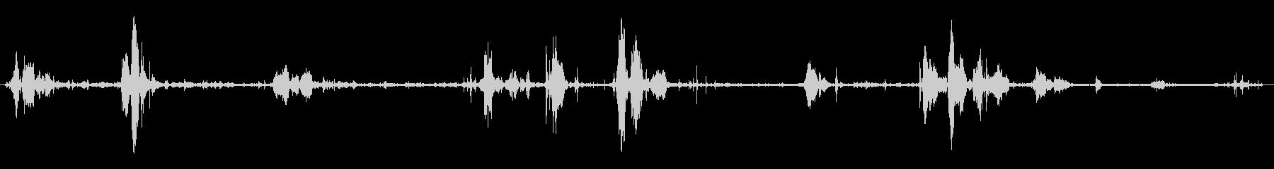 野生のタヌキ:興奮した鳴き声とうなり声の未再生の波形