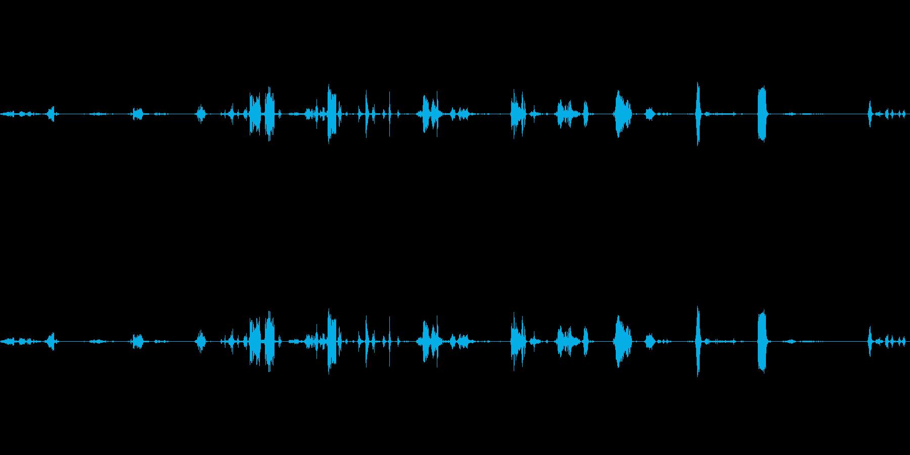 鳴き声、種牡馬の鳴き声、動物の再生済みの波形