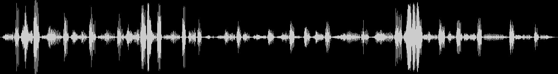 黒いヒョウ:絶え間ない喉の鳴き声、...の未再生の波形