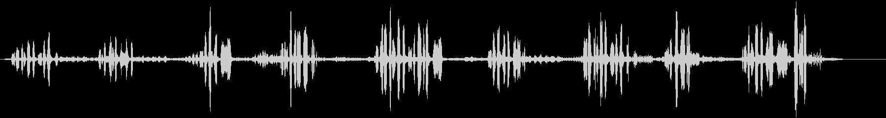 鳥クロウタドリの未再生の波形