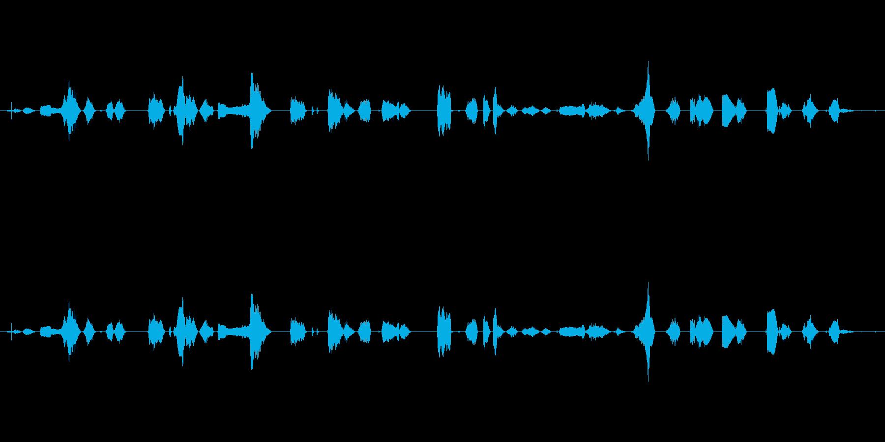 鳴き声 女性のワイン03の再生済みの波形